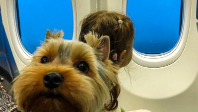 Перевозка животных в самолете.