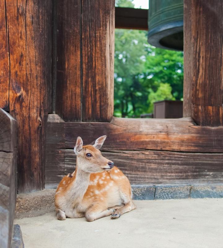 Японский город из детской сказки - Нара